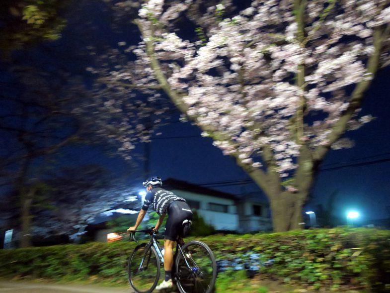 夜桜と共に